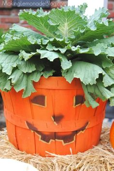 Outdoor decorating doesn't have to cost a fortune (or involve mums). Give a plain 'ol bushel basket a facelift and fill with budget friendly plants, plus more ideas for outdoor fall decor on the cheap!