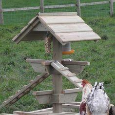 Chicken Jungle Gym and Brahma cockerel