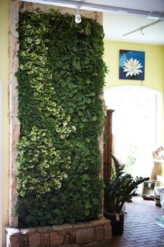 want a living wall in my bedroom!