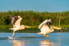 The exotic paradise of the Danube Delta has been included in UNESCO World Heritage since 1991, being the wildest wetland on the European continent and the only delta in the world to be a biosphere reserve.