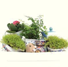 a tea pot mini garden fairy garden, gardening, A tea pot mini garden using a tea pot tea cups creamers and sugar bowls