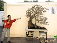 The 2010 Guangzhou International Bonsai Invitation Exhibition has just ended in the past weekend. This penjing exhibition, as one of the major cultural events Bonsai Plants, Bonsai Garden, Bonsai Styles, Asian Garden, Cultural Events, Growing Tree, Gardening, Topiary, Ikebana