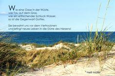 Wie eine Oase in der Wüste, wie Tau auf dem Gras, ... Nelli Müller