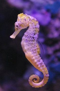 Seahorse - The slowest fish is the seahorse, which moves along at about 0.01 mph.