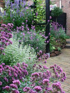 Verbena en el jardín.
