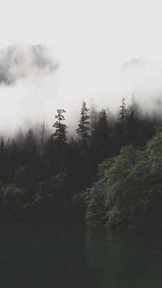 Forest River Crossing Mountain Fog Iphone 6 Plus Wallpaper
