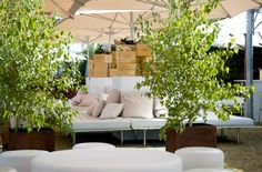 This may be crazy, but maybe we could rent Birch Trees in pots to go out on the deck or at the entrance to MYC Outdoor Rooms, Outdoor Sofa, Outdoor Furniture Sets, Outdoor Decor, Potted Trees, Birch Trees, Laurent Perrier, Aesthetic Food, Flower Decorations