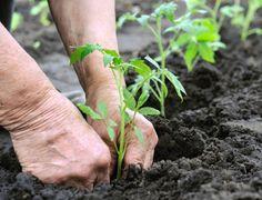 viver em contato c a terra - plantando!  http://imguol.com/2012/05/04/horta-1336172328676_615x470.jpg