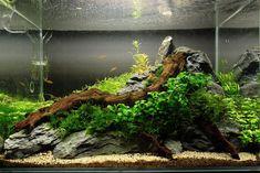 Die 427 Besten Bilder Von Aquarium Aquarium Ideas Fish Tanks Und