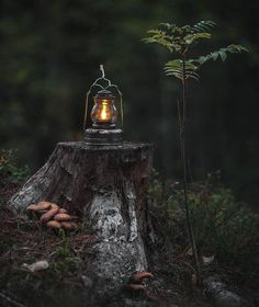 The Lunar Witch - veverybeautiful: victornirs Best Photo Background, Background Pictures, Old Lanterns, Over The Garden Wall, Photo Backgrounds, Oil Lamps, Belle Photo, Peace And Love, Woodland Forest