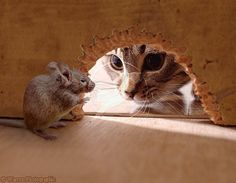 """so close! This reminds me of the cartoon """"Tom & Jerry."""""""
