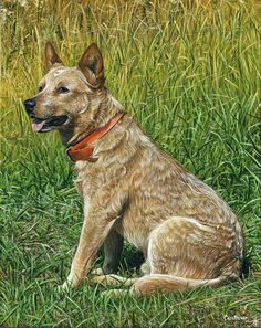 Dingo Print featuring the painting Dingo by Cara Bevan