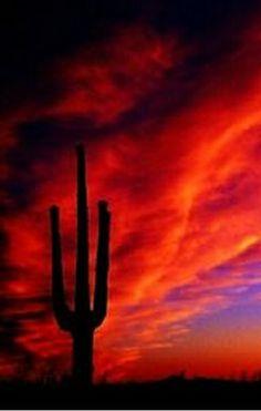 Arizona desert sunset - pretty