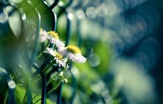 Обои картинки фото цветы, природа, макро