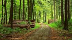 forest - Google Search Timber Companies, Image Hero, Forest Path, Website Images, Forest Stewardship Council, Agriculture, Firewood, Paths, Environment