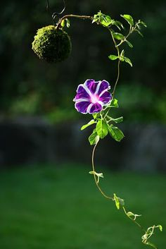 BANCO DE IMÁGENES: 60 fotografías de las flores más hermosas del mundo