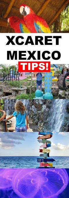 A Review of Xcaret Cancun Mexico. We look at the best transportation options, the most fun things to do and see, and even give our helpful tips for visiting Xcaret in the Mayan Riviera
