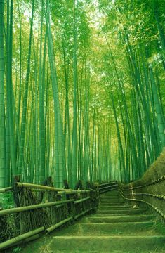The Arashiyama Bamboo Forest in Kyoto is a 500-metre pathway through the Sagano Bamboo Forest. It is one of Japan's most picturesque natural environments and is known for the sound that is made when the wind blows through the thick bamboo grove. The music was even voted one of Japan's must-preserve sounds. via @AOL_Lifestyle Read more: https://www.aol.co.uk/2014/01/06/holiday-bucket-list-unusual-places-to-see-before-you-die/?a_dgi=aolshare_pinterest#fullscreen