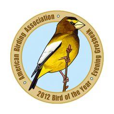 Evening Grosbeak is the American Birding Association's Bird of the Year for 2012