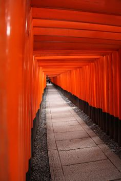 Kyoto en orange Orange Is The New Black, Orange Grey, Orange Color, Color Pop, Yellow, Mint Aesthetic, Contrast Photography, Color Wars, Orange You Glad