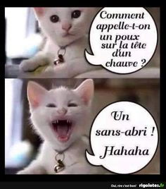 Dit is lachen ha ha ha . Funny Animal Memes, Funny Animal Pictures, Funny Photos, Funny Cats, Funny Animals, Funny Jokes, Cute Animals, Hilarious, Humor Minion