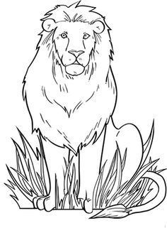 lion coloring pages to print lion color page tiger color page