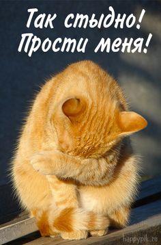 Funny Animals, Cute Animals, Dog Cat, Pets, Postcards, Funny Stuff, Ceiling, Illustrations, Amor