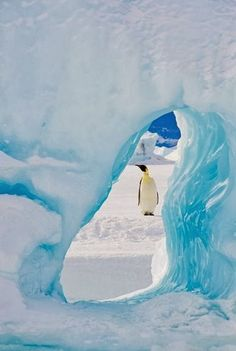 Manchot empereur, Antarctique