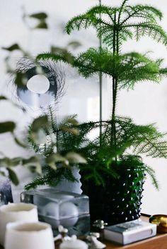 Koniferen für Vorweihnachtszeit mit weißen Kerzen & Amaryllis kombiniert Hortus Svenskt tenn