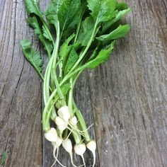 Baby turnips from Marin Roots Farms found at cuesa San Francisco @ preppings.com