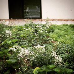 BURO BUITEN | Privétuin Edingen | Vanhaelen Architecten | Pieter Van Hauwermeiren | tuinarchitect | tuinarchitectuur | Landschapsarchitectuur Outdoor Plants, Garden Plants, Plant Design, Garden Design, Perennial Plant, Art Pictures, Planting, Perennials, Garden Ideas
