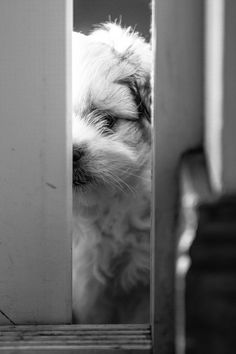 """Can I please come in to play ? Can I Please, Puppies, Play, Canning, Dogs, Animals, Animales, Puppys, Animaux"