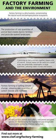 Environmental damage | Compassion in World Farming