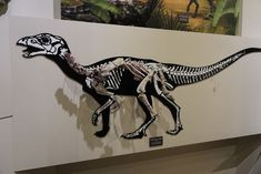 """Taking a stroll down memory lane, back to our visit to the #NationalScienceMuseum in #Daejeon, South #Korea, where we saw this beautiful skeleton of the #dinosaur Koreanosaurus. Koreanosaurus was found in Boseong County in South Korea (so it's fitting the name means """"Korean lizard""""!) #iknowdino #dinosaurs Daejeon, Science Museum, Dinosaurs, South Korea, Skeleton, Korean, Beautiful, Art, Art Background"""