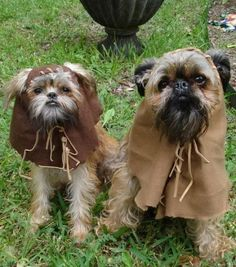 Ewok dogs--be inspired!