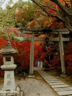Japón  Tokyo