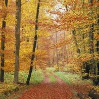 Find high quality trees of leaves wallpapers wallpapers and backgrounds on Desktop Nexus. Page 1