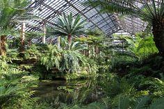 Image result for fern room