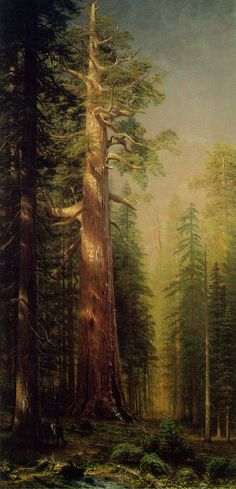 Love to know who did this . . . Albert Bierstadt ~ The Great Trees, Mariposa…