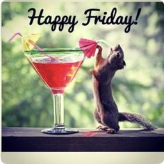 It is funny picture of a squirrel who is drinking juice to remove his thrust because of hot season. This attitude of squirrel made this picture more funny. Friday Quotes Humor, Happy Friday Quotes, Happy Quotes, Friday Memes, Monday Quotes, Tgif Quotes, Friday Pics, Friday Pictures, Wednesday Humor