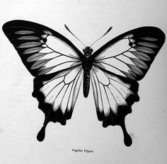 Black n white butterfly. I would put color in the white spots