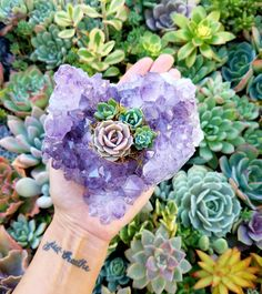 Succulents and amethyst.