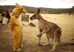Um canguru desconcertado.