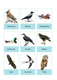 Mushroom Crafts, Russian Language Learning, Bird Identification, Easy Drawings For Kids, Learn Russian, Reggio Emilia, Educational Games, Science For Kids, Kids Education