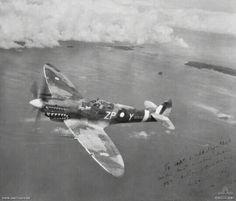 f48b48923af Side view of the  Grey Nurse  (ZP-Y a MK 8 Spitfire aircraft of 457  Squadron RAAF