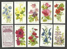 english garden flowers - Google Search Kew Gardens, English, Holiday Decor, Flowers, Plants, Painting, Gardening, Google Search, Flower Gardening