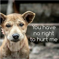 No right to hurt this dog or any animal in any way...