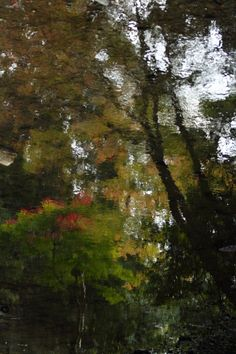 Autumnal leaves to the water surface