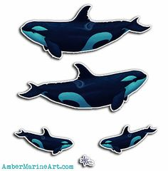"""Vinyl Sticker Set ••• Killer Whale ~ Orca art by Amber Marine (Printed on a square sheet with various size options, up to 14""""x14""""!)"""