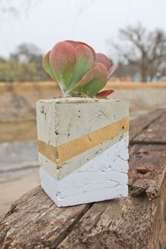 DIY holiday gift idea! If I can do it, you can do it! (P.S. I did really do it, and guess what? Cement planters are super heavy, but also really cool looking. Also, I have no idea how this lady got her paint lines all perfect like that.) -Lijah